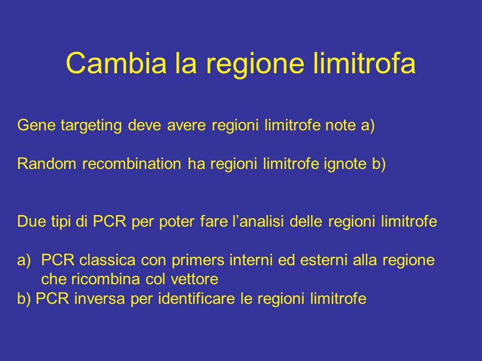 Cambia la regione limitrofa Gene targeting deve avere regioni limitrofe note a) Random recombination ha regioni limitrofe ignote b) Due tipi di PCR pe