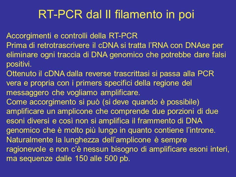 RT-PCR dal II filamento in poi Accorgimenti e controlli della RT-PCR Prima di retrotrascrivere il cDNA si tratta l'RNA con DNAse per eliminare ogni tr