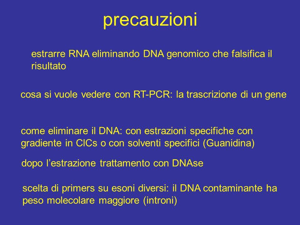 precauzioni estrarre RNA eliminando DNA genomico che falsifica il risultato cosa si vuole vedere con RT-PCR: la trascrizione di un gene come eliminare