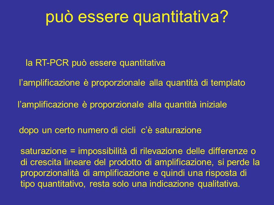 può essere quantitativa? la RT-PCR può essere quantitativa l'amplificazione è proporzionale alla quantità di templato l'amplificazione è proporzionale
