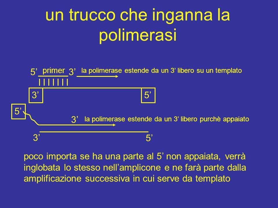 un trucco che inganna la polimerasi 3'5' 3' primer la polimerase estende da un 3' libero su un templato la polimerase estende da un 3' libero purchè a