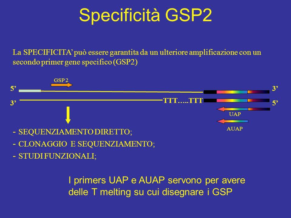 GSP 2 TTT…..TTT 5' 3' AUAP UAP 3' 5' La SPECIFICITA' può essere garantita da un ulteriore amplificazione con un secondo primer gene specifico (GSP2) -
