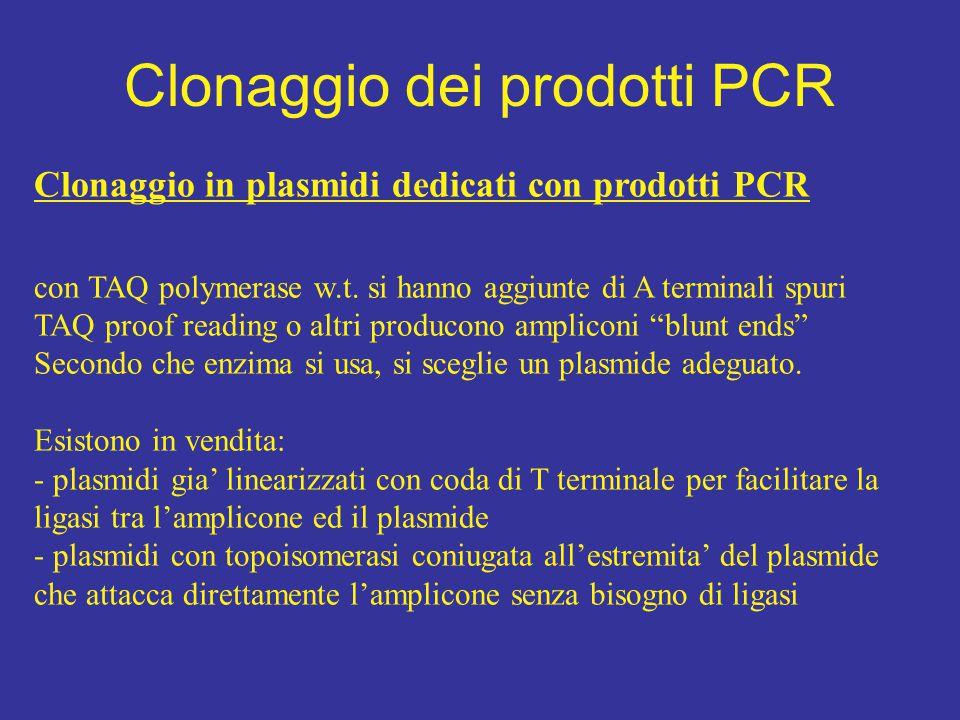 Clonaggio in plasmidi dedicati con prodotti PCR con TAQ polymerase w.t. si hanno aggiunte di A terminali spuri TAQ proof reading o altri producono amp