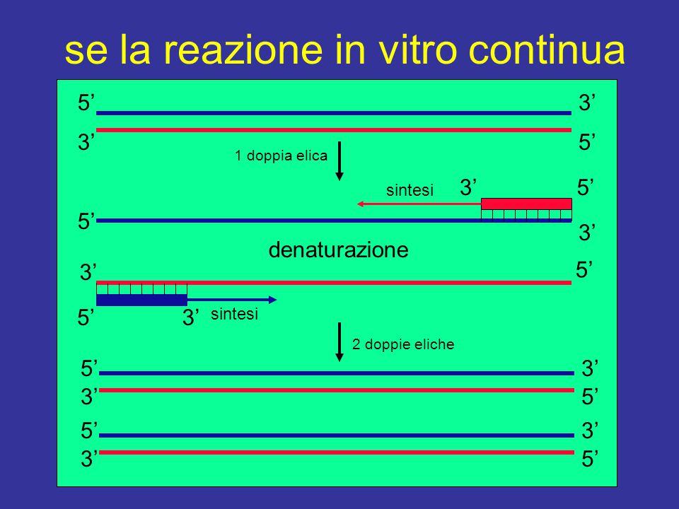 se la reazione in vitro continua 5' 3' denaturazione 5'3' sintesi 3' sintesi 5'3' 5' 3' 5'3' 5'3' 5'3' 5'3' 5'3' 1 doppia elica 2 doppie eliche