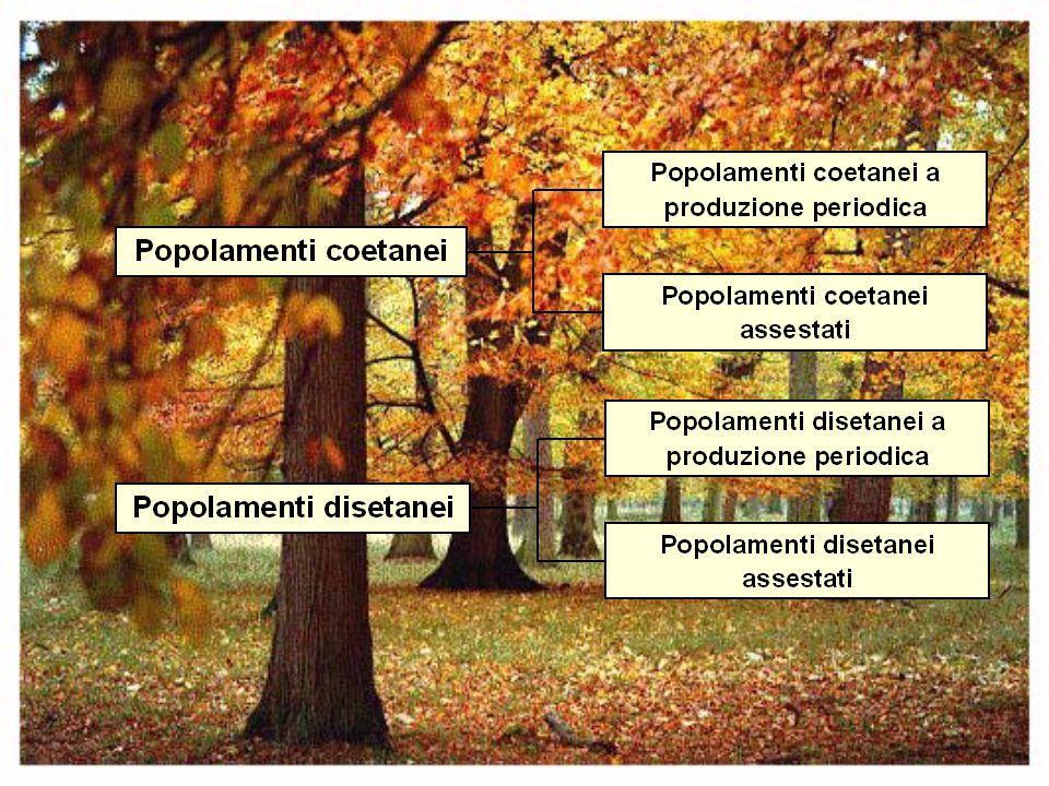 Valore del fondo forestale Nel caso di periodicità Nel caso di annualità