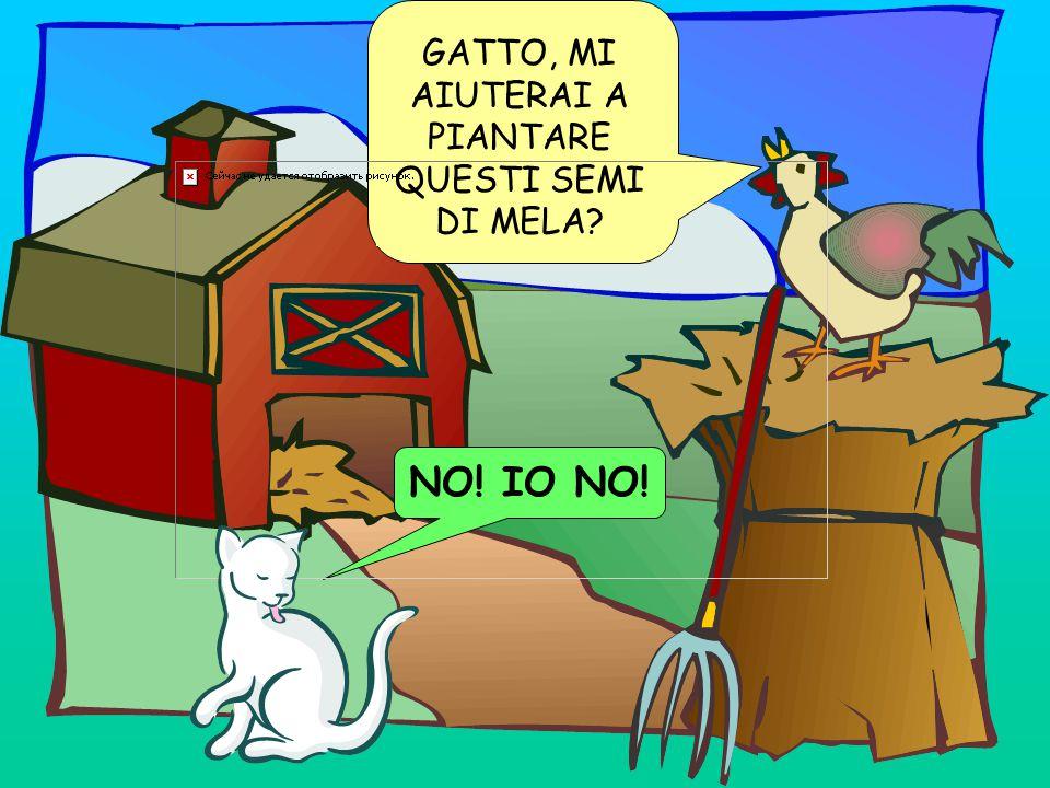 GATTO, MI AIUTERAI A PIANTARE QUESTI SEMI DI MELA? NO! IO NO!