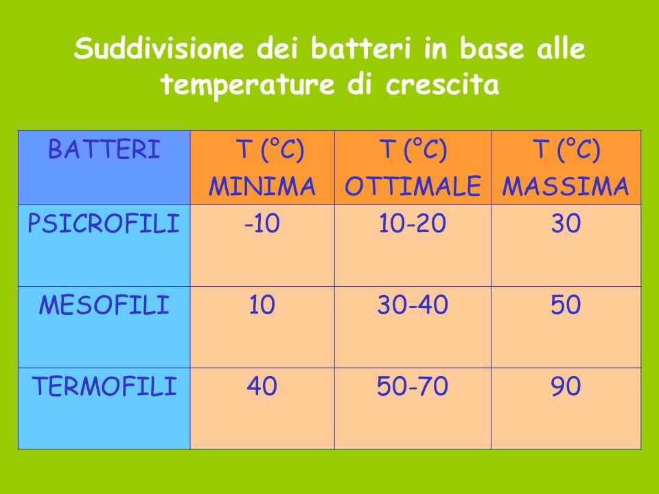 Suddivisione dei batteri in base alle temperature di crescita BATTERI T (°C) MINIMA T (°C) OTTIMALE T (°C) MASSIMA PSICROFILI-1010-2030 MESOFILI1030-4