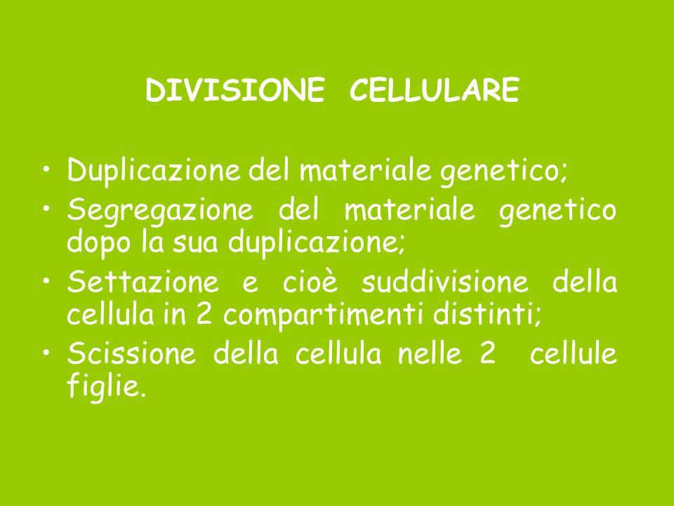 DIVISIONE CELLULARE Duplicazione del materiale genetico; Segregazione del materiale genetico dopo la sua duplicazione; Settazione e cioè suddivisione