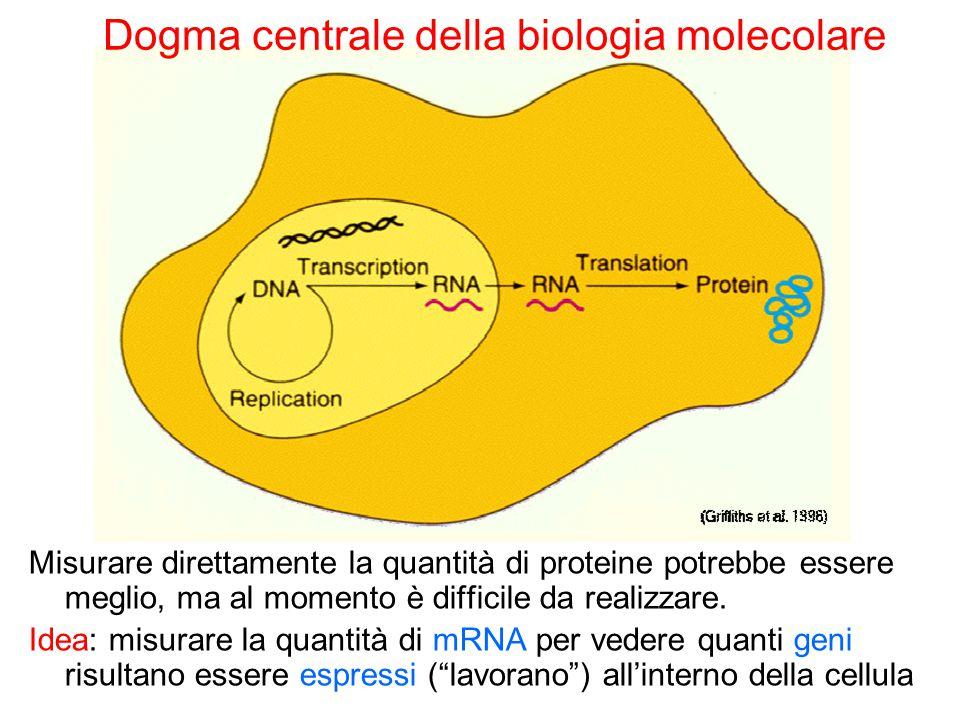 Misurare direttamente la quantità di proteine potrebbe essere meglio, ma al momento è difficile da realizzare. Idea: misurare la quantità di mRNA per