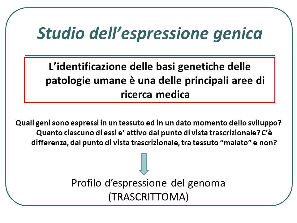 Studio dell'espressione genica Quali geni sono espressi in un tessuto ed in un dato momento dello sviluppo? Quanto ciascuno di essi e' attivo dal punt