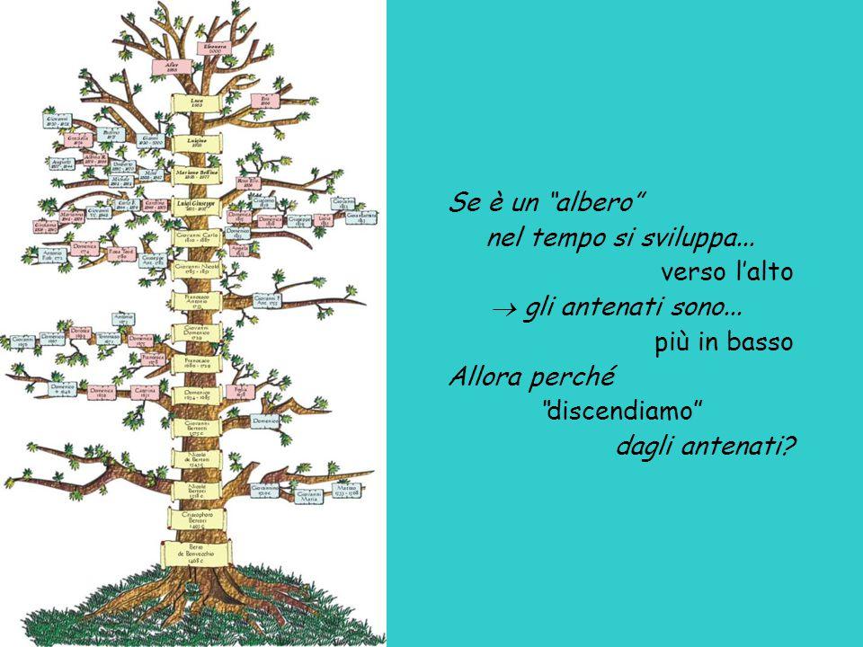"""Se è un """"albero"""" nel tempo si sviluppa... verso l'alto  gli antenati sono... più in basso Allora perché """"discendiamo"""" dagli antenati?"""