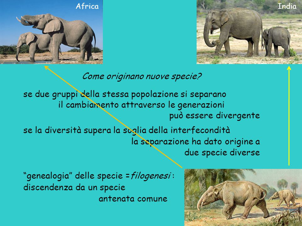 Come originano nuove specie? se due gruppi della stessa popolazione si separano il cambiamento attraverso le generazioni può essere divergente se la d