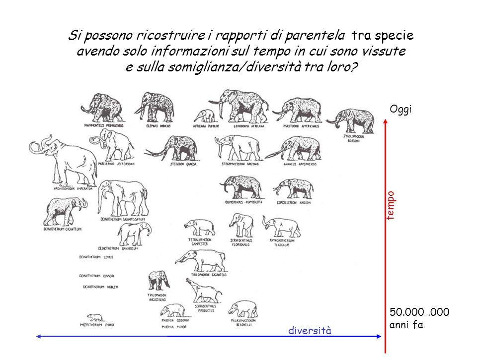 Oggi 50.000.000 anni fa diversità tempo Si possono ricostruire i rapporti di parentela tra specie avendo solo informazioni sul tempo in cui sono vissu