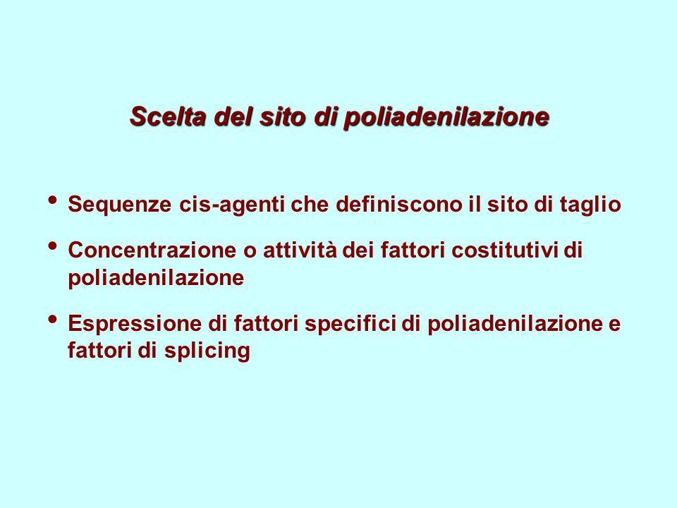 Scelta del sito di poliadenilazione Sequenze cis-agenti che definiscono il sito di taglio Concentrazione o attività dei fattori costitutivi di poliadenilazione Espressione di fattori specifici di poliadenilazione e fattori di splicing