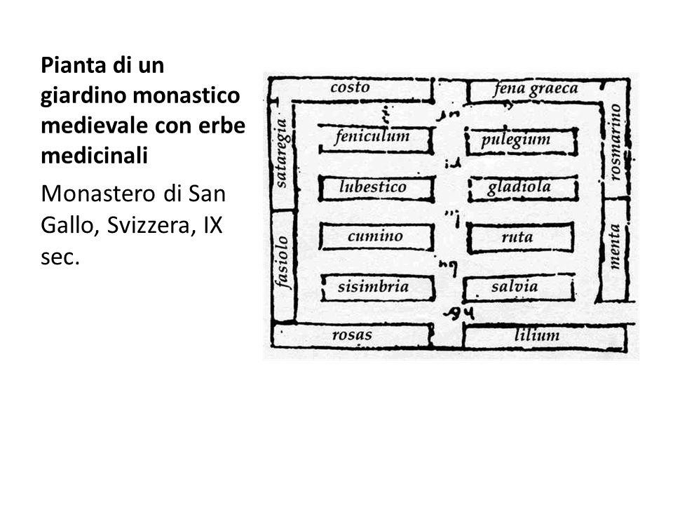 Monastero di San Gallo, Svizzera, IX sec. Pianta di un giardino monastico medievale con erbe medicinali
