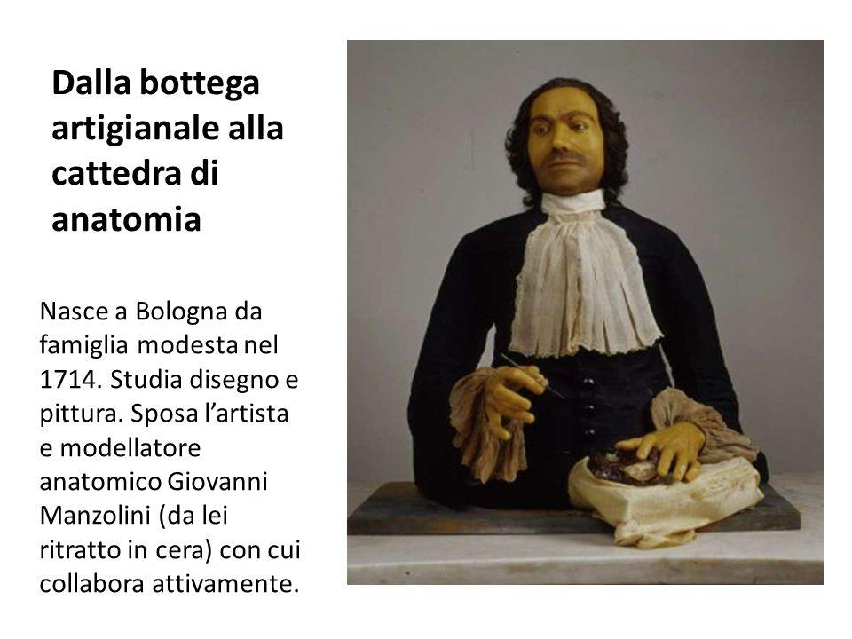 Dalla bottega artigianale alla cattedra di anatomia Nasce a Bologna da famiglia modesta nel 1714. Studia disegno e pittura. Sposa l'artista e modellat