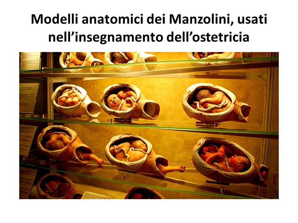 Modelli anatomici dei Manzolini, usati nell'insegnamento dell'ostetricia
