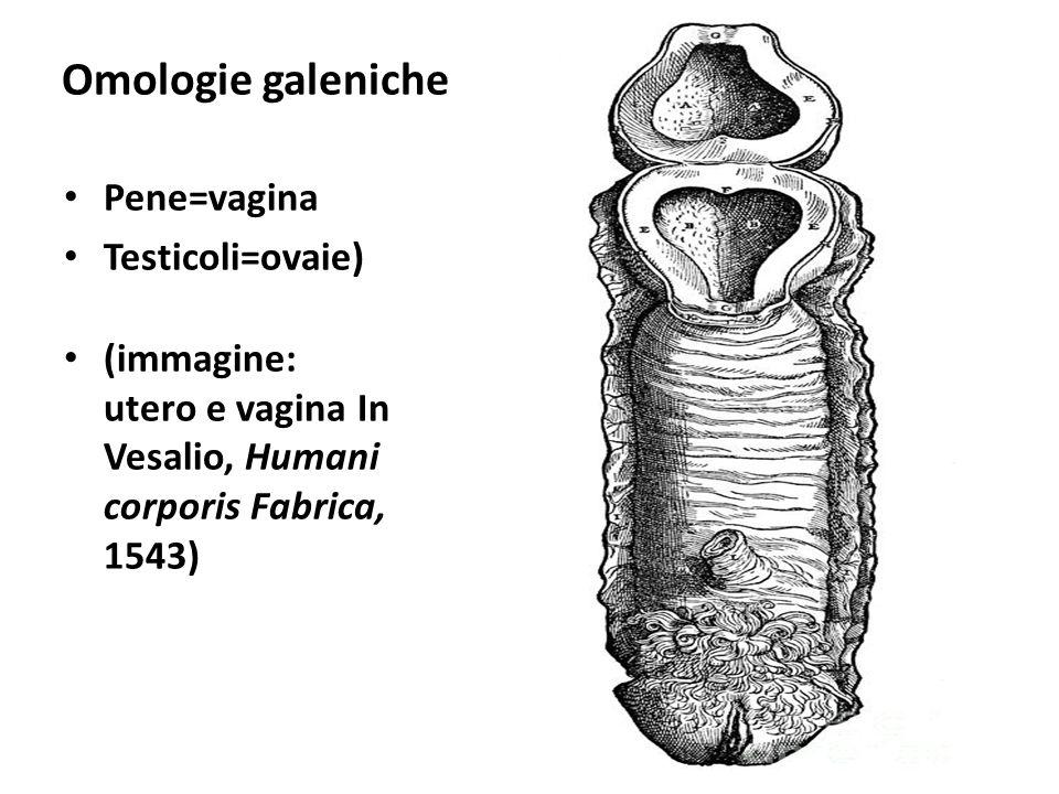 Omologie galeniche Pene=vagina Testicoli=ovaie) (immagine: utero e vagina In Vesalio, Humani corporis Fabrica, 1543)