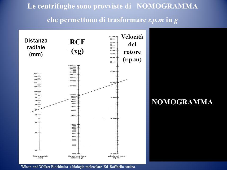 Le centrifughe sono provviste di NOMOGRAMMA che permettono di trasformare r.p.m in g Forza centrifuga relativa Distanza radiale (mm) RCF (xg) NOMOGRAM