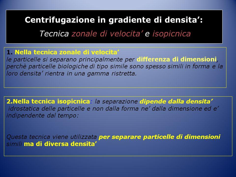 Centrifugazione in gradiente di densita': Tecnica zonale di velocita' e isopicnica 1. Nella tecnica zonale di velocita' le particelle si separano prin