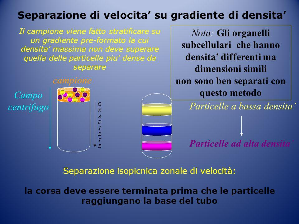Separazione di velocita' su gradiente di densita' Particelle a bassa densita' Particelle ad alta densita' GRADIETEGRADIETE Campo centrifugo campione I