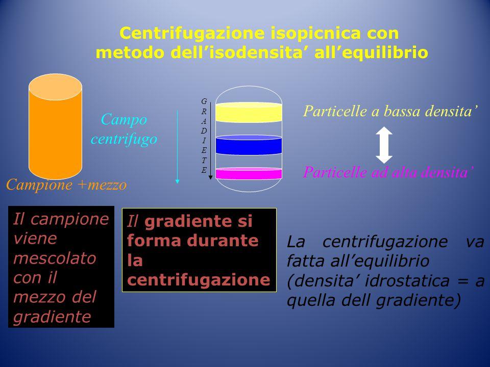 Centrifugazione isopicnica con metodo dell'isodensita' all'equilibrio Campione +mezzo Particelle a bassa densita' Particelle ad alta densita' La centr