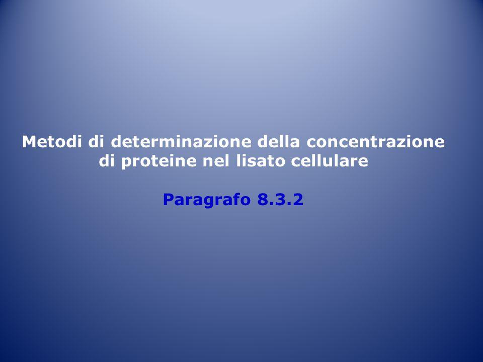 Metodi di determinazione della concentrazione di proteine nel lisato cellulare Paragrafo 8.3.2
