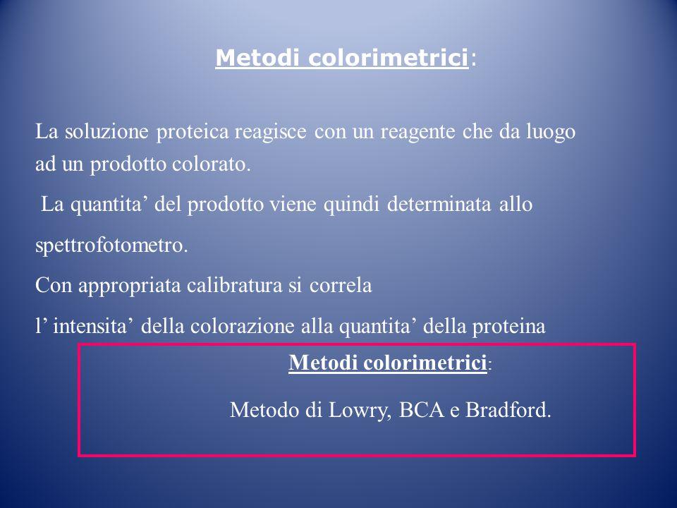 Metodi colorimetrici: La soluzione proteica reagisce con un reagente che da luogo ad un prodotto colorato. La quantita' del prodotto viene quindi dete