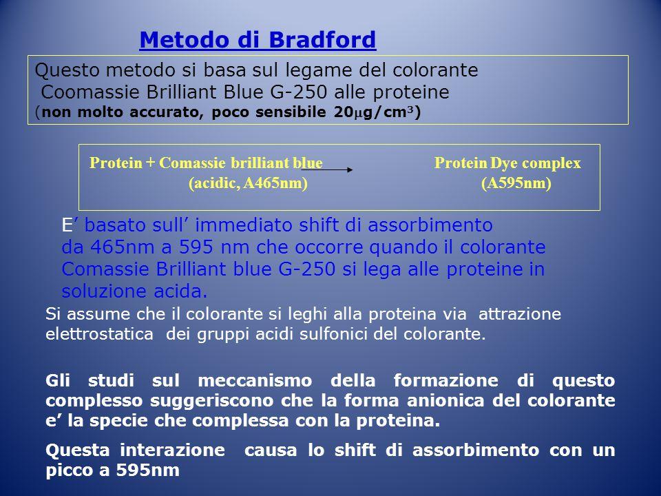 Metodo di Bradford Questo metodo si basa sul legame del colorante Coomassie Brilliant Blue G-250 alle proteine (non molto accurato, poco sensibile 20