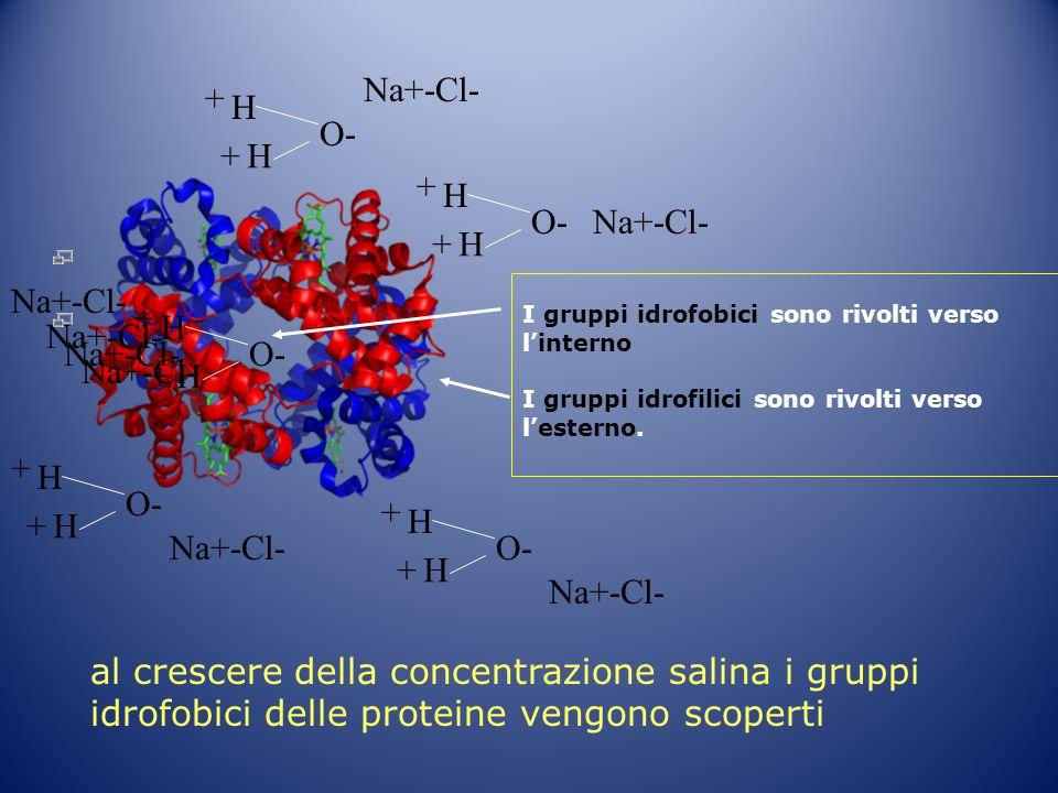 I gruppi idrofobici sono rivolti verso l'interno I gruppi idrofilici sono rivolti verso l'esterno. H O- H + +H H + +H H + +H H + +H H + + Na+-Cl- al c