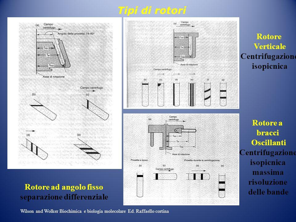 Rotore Verticale Centrifugazione isopicnica Rotore ad angolo fisso separazione differenziale Rotore a bracci Oscillanti Centrifugazione isopicnica mas