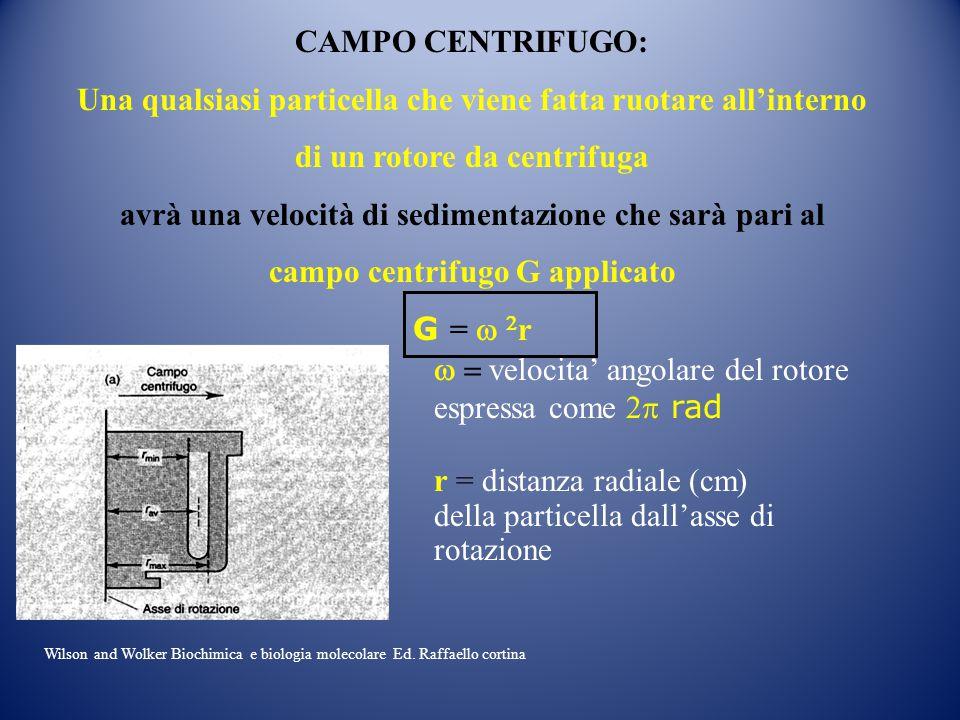 CAMPO CENTRIFUGO: Una qualsiasi particella che viene fatta ruotare all'interno di un rotore da centrifuga avrà una velocità di sedimentazione che sarà