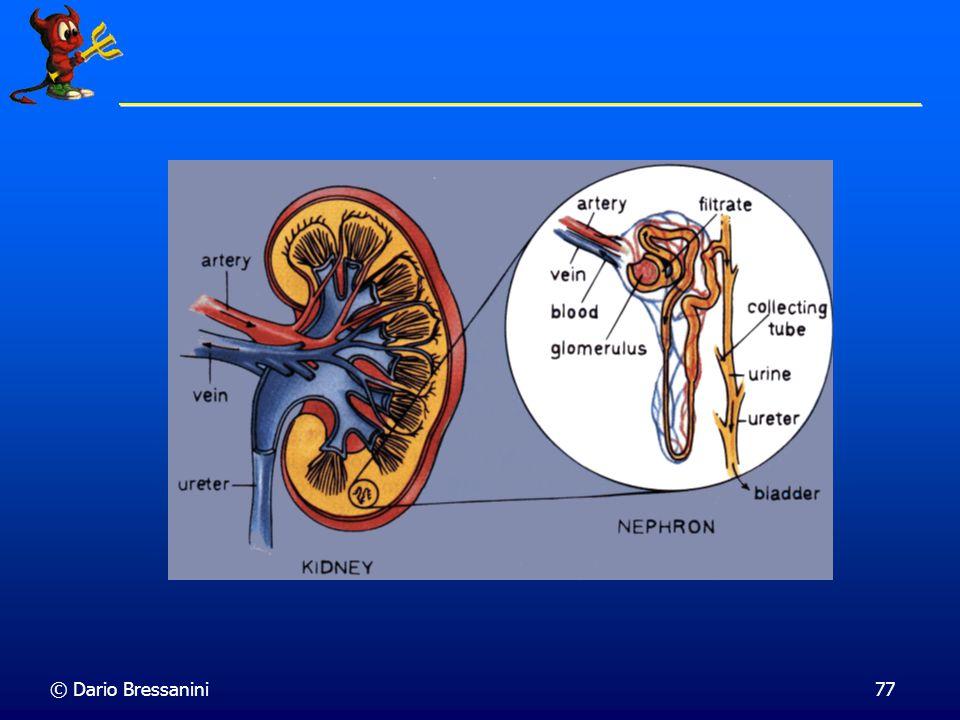 © Dario Bressanini76 Reni e Dialisi I prodotti di scarto trasportati dal sangue vengono dializzati dai reni attraverso una membrana semipermeabile. At