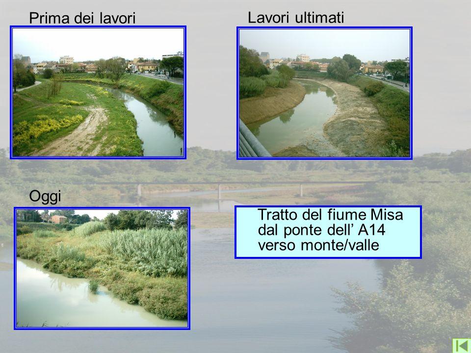 Tratto del fiume Misa dal ponte dell' A14 verso monte/valle Prima dei lavori Lavori ultimati Oggi