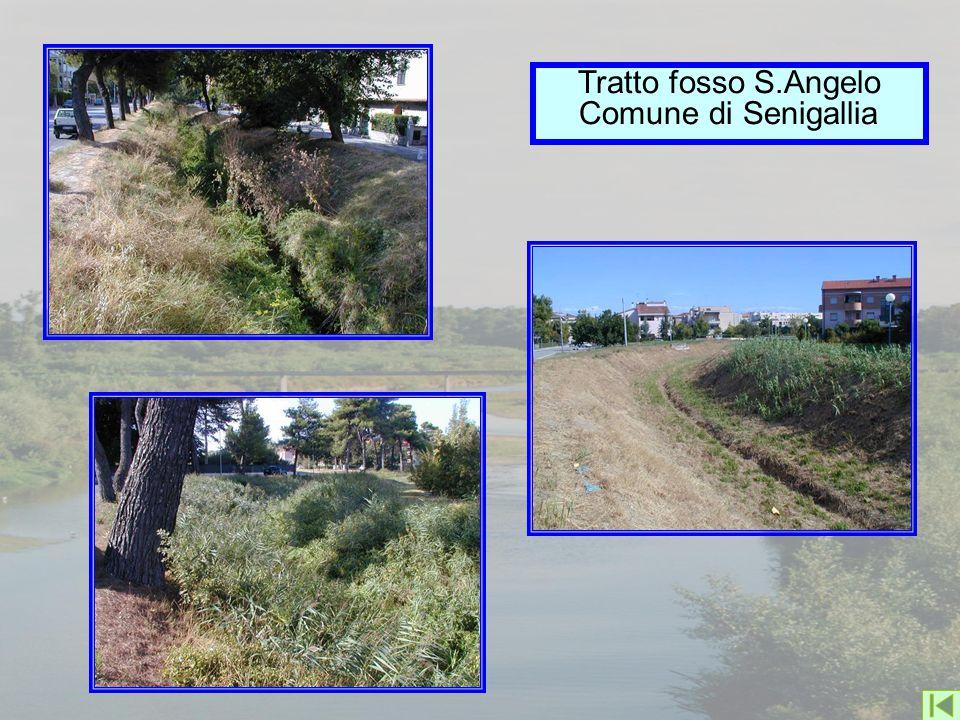 Tratto fosso S.Angelo Comune di Senigallia