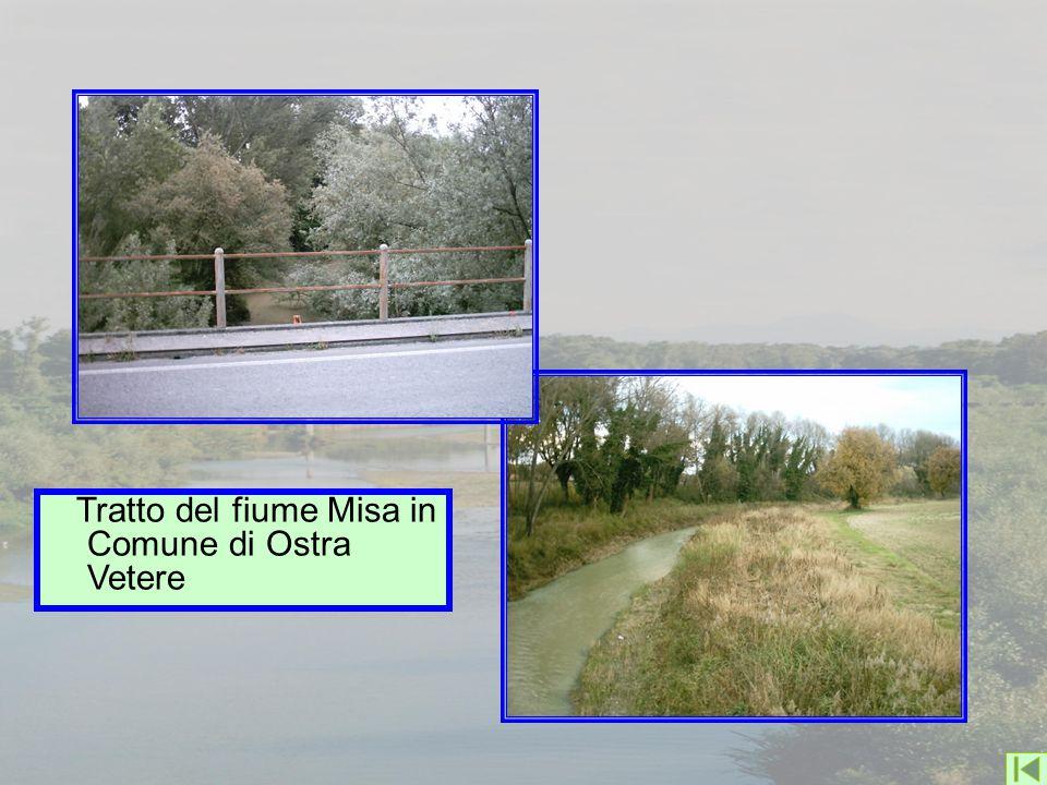 Tratto del fiume Misa in Comune di Ostra Vetere