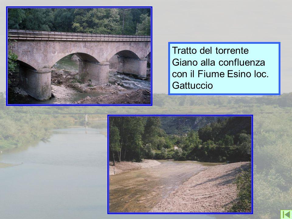 Tratto del torrente Giano alla confluenza con il Fiume Esino loc. Gattuccio