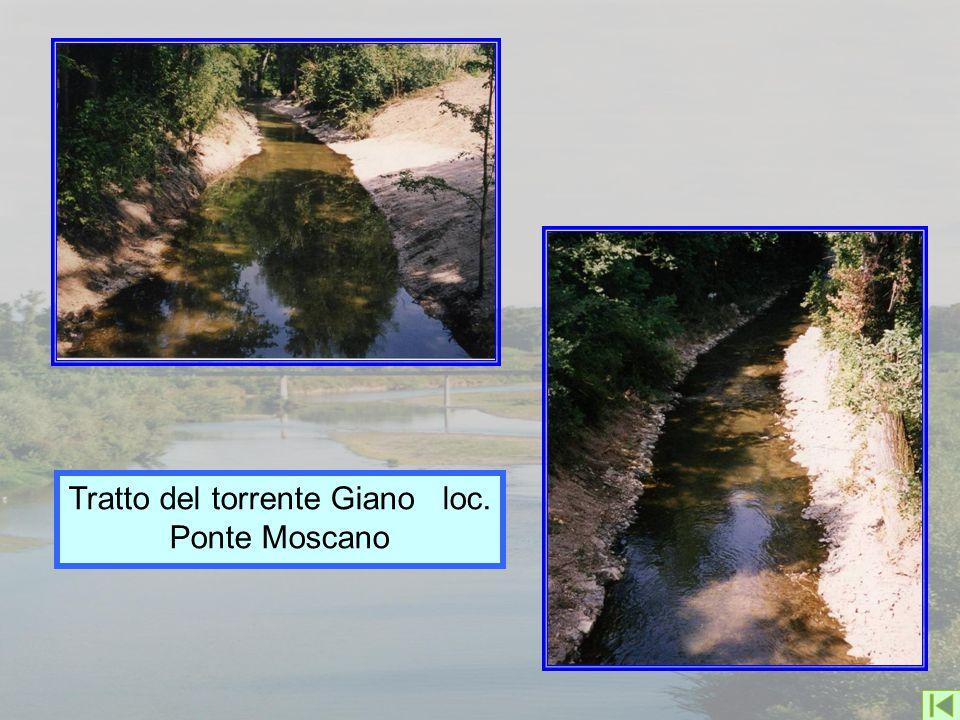 Tratto del torrente Giano loc. Ponte Moscano