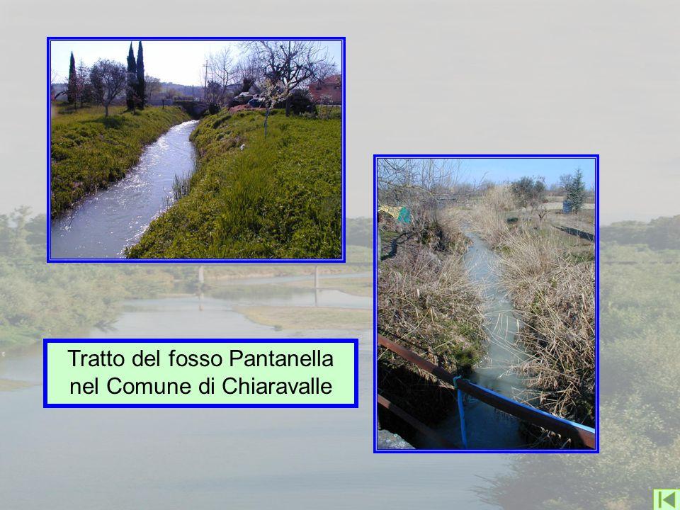 Tratto del fosso Pantanella nel Comune di Chiaravalle