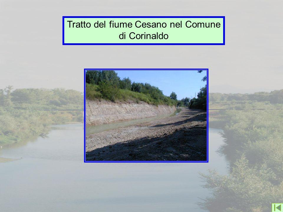 Tratto del fiume Cesano nel Comune di Corinaldo