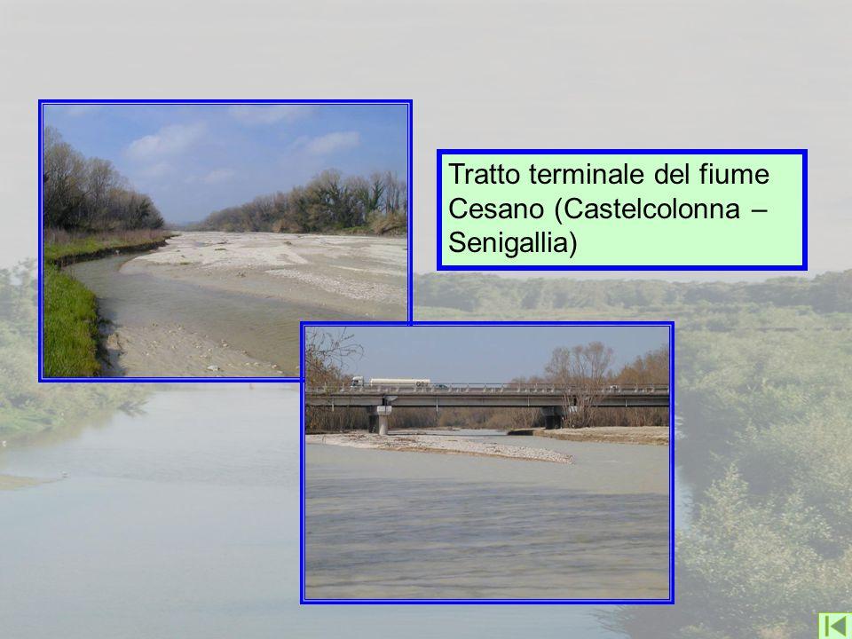 Tratto terminale del fiume Cesano (Castelcolonna – Senigallia)