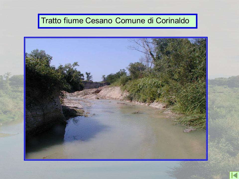 Tratto fiume Cesano Comune di Corinaldo