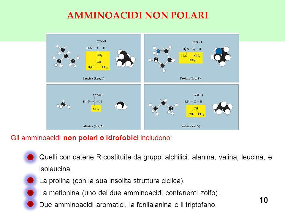 10 AMMINOACIDI NON POLARI Gli amminoacidi non polari o idrofobici includono: Quelli con catene R costituite da gruppi alchilici: alanina, valina, leuc