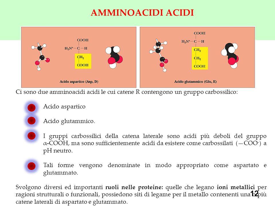 12 AMMINOACIDI ACIDI Ci sono due amminoacidi acidi le cui catene R contengono un gruppo carbossilico: Acido aspartico Acido glutammico.