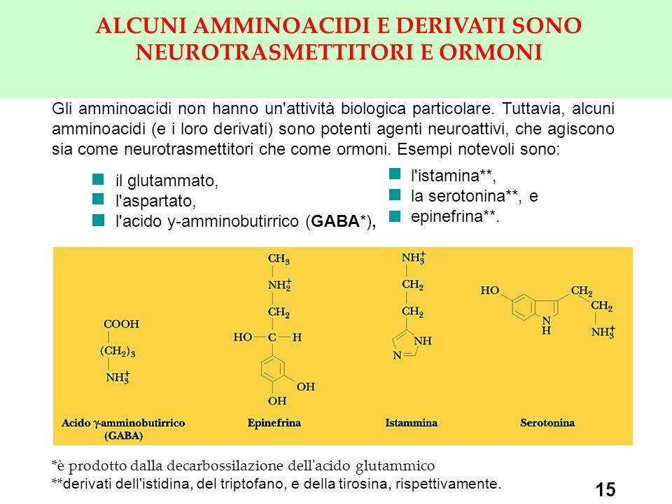 15 ALCUNI AMMINOACIDI E DERIVATI SONO NEUROTRASMETTITORI E ORMONI Gli amminoacidi non hanno un attività biologica particolare.