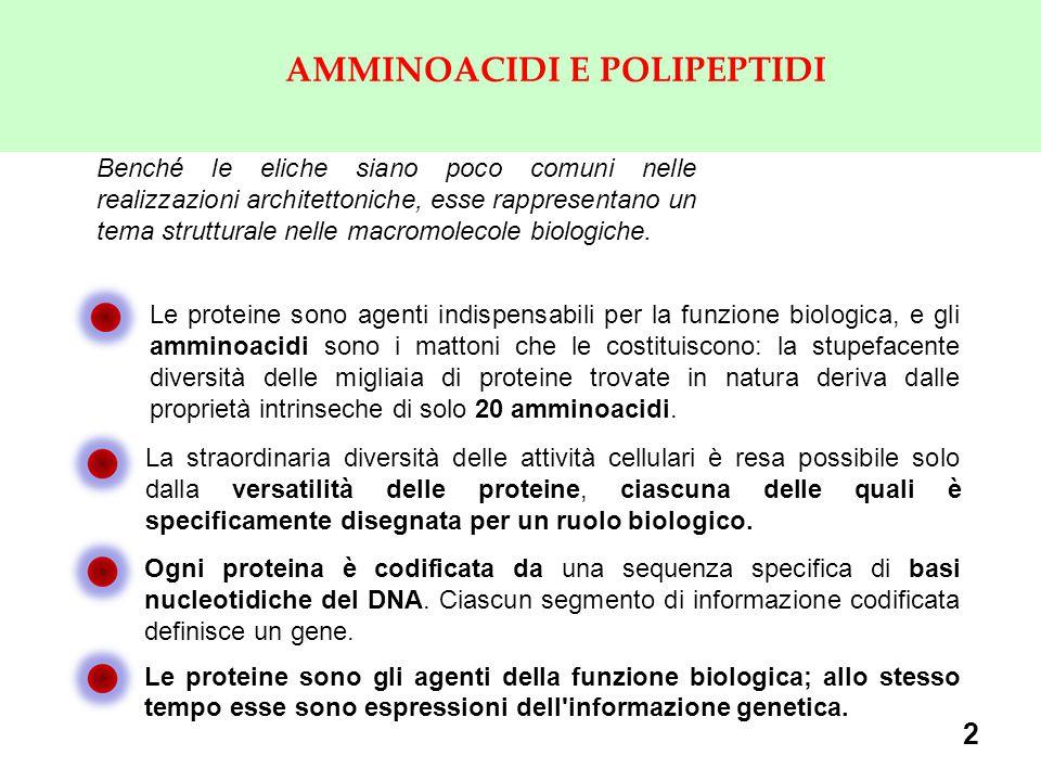 3 GLI AMMINOACIDI: I MATTONI DELLE PROTEINE Le peculiari proprietà chimiche degli amminoacidi includono la capacità di polimerizzare, nuove proprietà acido-base, variabilità di struttura e di funzionalità chimica nelle catene laterali amminoacidiche, chiralità.