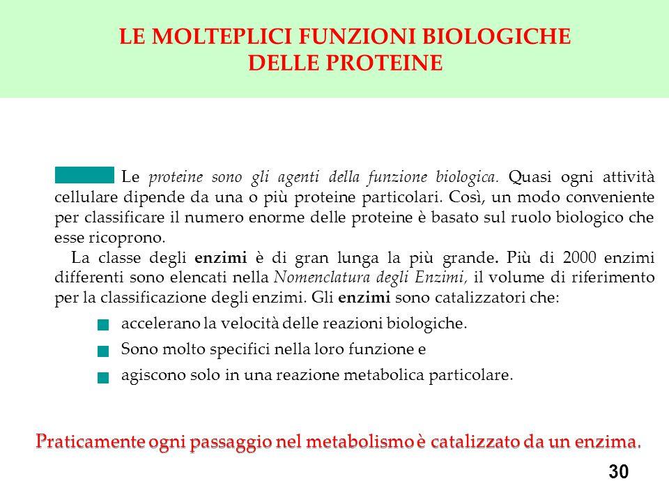 30 LE MOLTEPLICI FUNZIONI BIOLOGICHE DELLE PROTEINE Le proteine sono gli agenti della funzione biologica.
