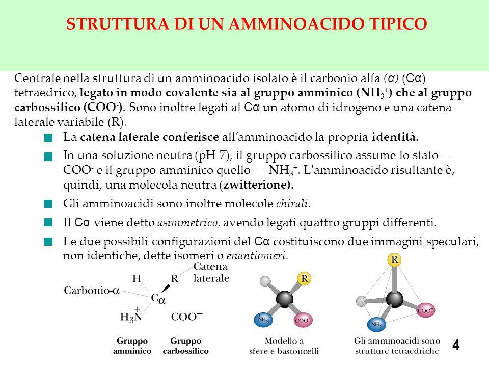 4 STRUTTURA DI UN AMMINOACIDO TIPICO Centrale nella struttura di un amminoacido isolato è il carbonio alfa ( α ) ( Cα ) tetraedrico, legato in modo covalente sia al gruppo amminico (NH 3 + ) che al gruppo carbossilico (COO - ).