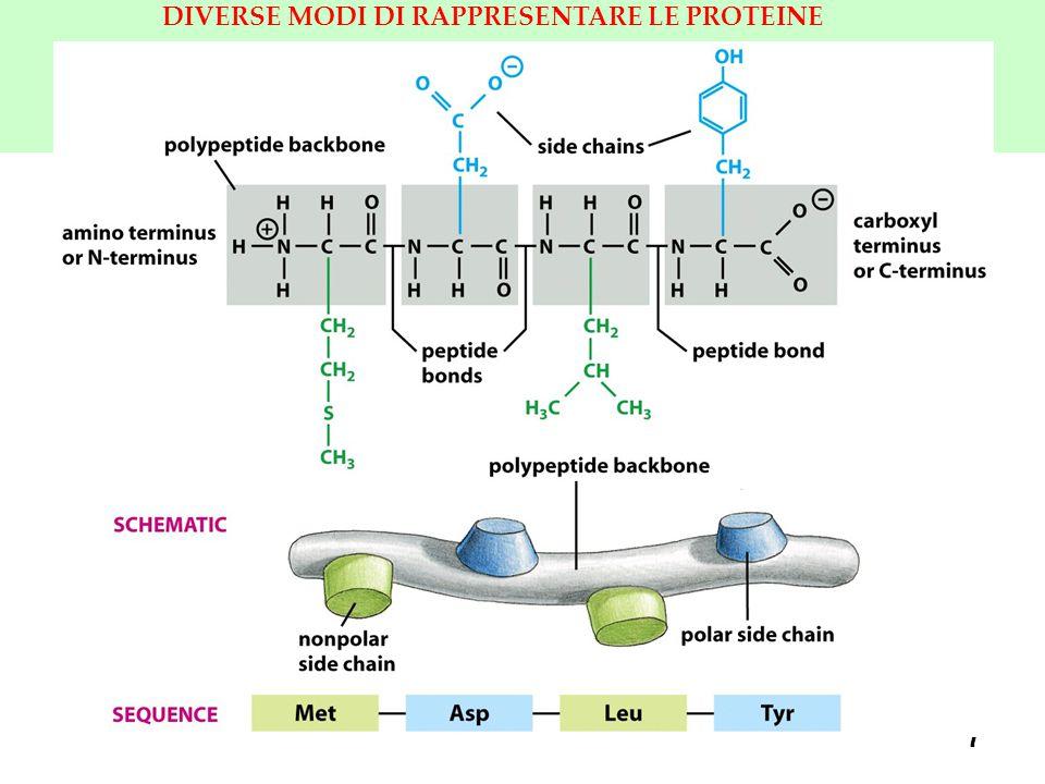 18 LEGAME PEPTIDICO HA UN CARATTERE PARZIALE DI LEGAME DOPPIO b) Tuttavia è possibile un altra forma di risonanza per il legame peptidico, in cui gli atomi C e N lasciano una coppia non appaiata di e - sull ossigeno.