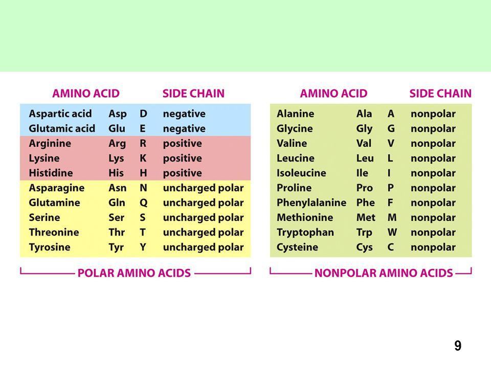 10 AMMINOACIDI NON POLARI Gli amminoacidi non polari o idrofobici includono: Quelli con catene R costituite da gruppi alchilici: alanina, valina, leucina, e isoleucina.